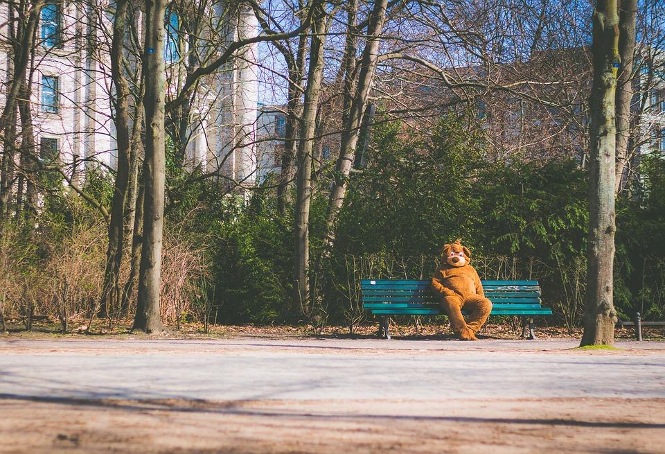 bear-2203644_960_720